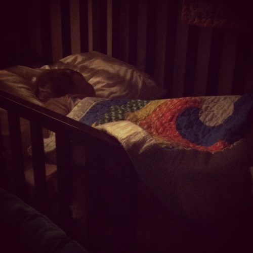 Doodle & the Toddler Bed